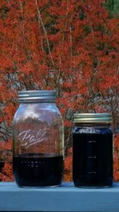 Black walnut ink in Mason jars